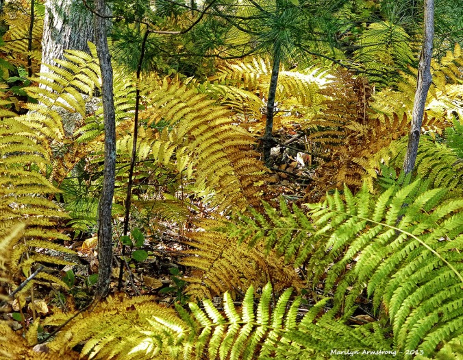 Bright ferns on a forest floor