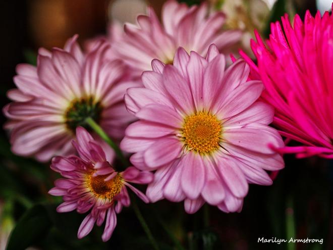 December bouquet