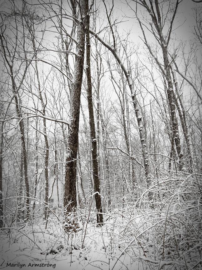 72-February Snow OO_1