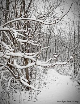 72-February Snow OO_2
