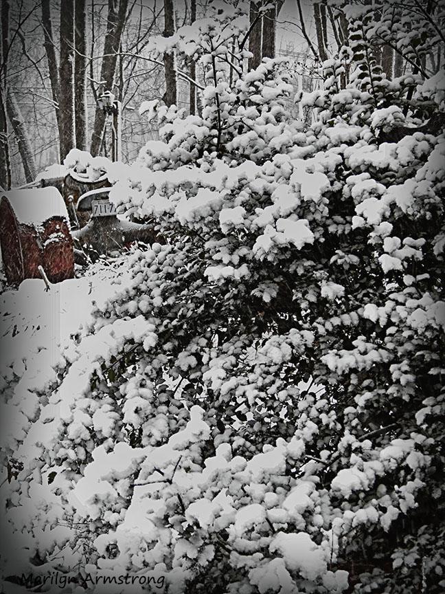 72-February Snow OO_4