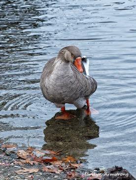 72-Mr-Goose_21