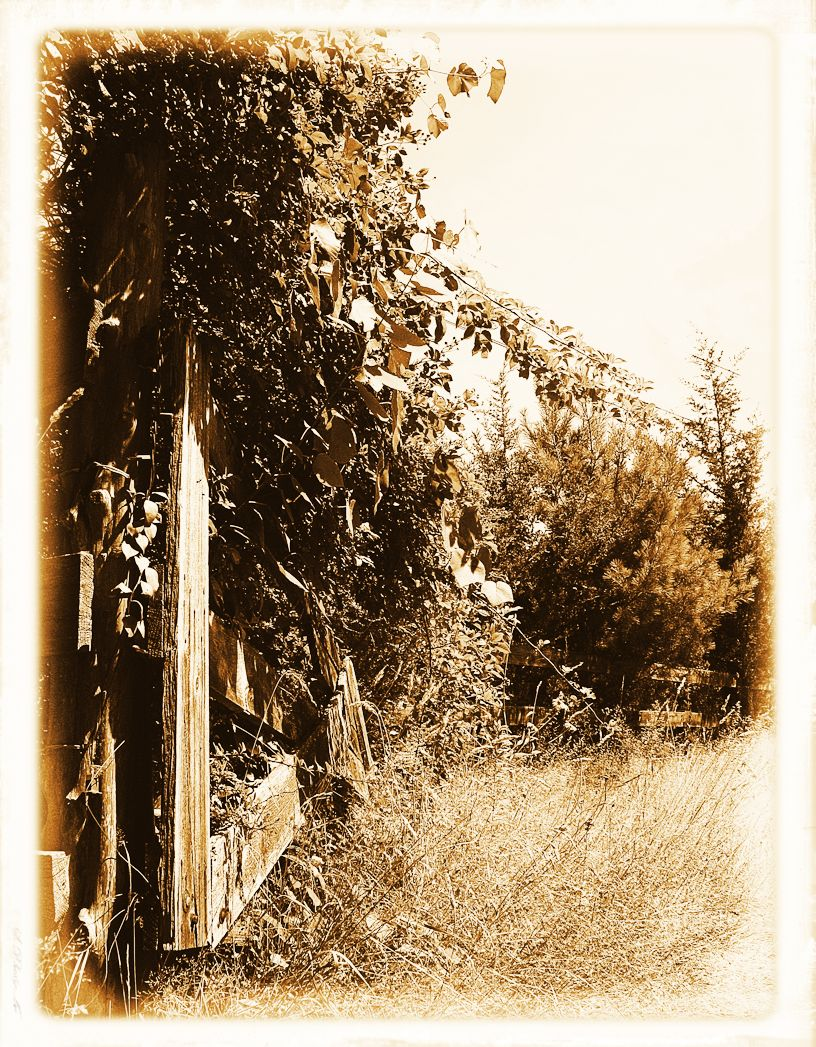 FENCES, A MENDING WALL, AND OTHER BARRIERS – Serendipity – Seeking ...