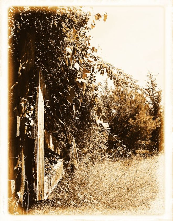 75-Along The Fence Sepia
