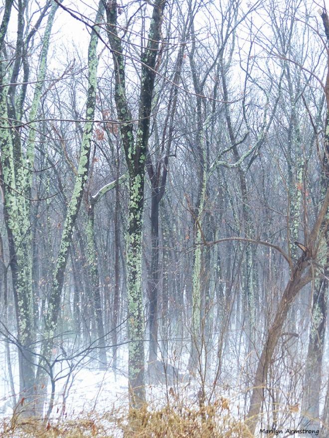 72-1st Snow_7