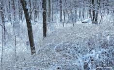 72-Bird-Snow-Sunday0125_07