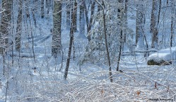 72-Bird-Snow-Sunday0125_09