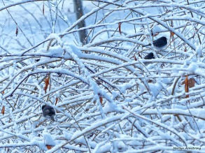72-Bird-Snow-Sunday0125_19