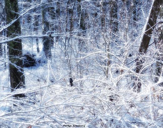 72-Bird-Snow-Sunday0125_22
