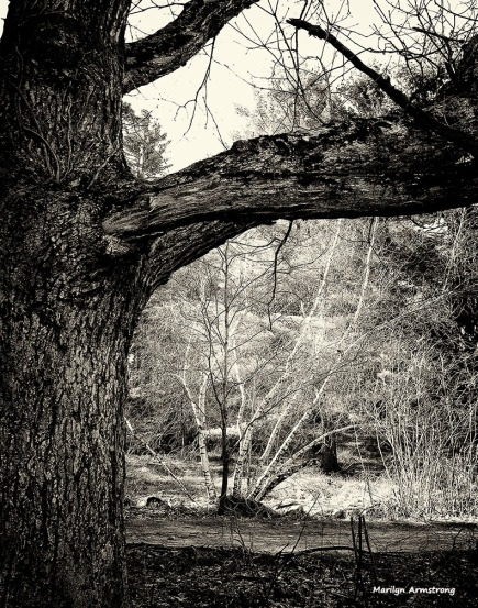 72-BW-Bark-Entwood