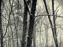 72-BW-Snowing-JAN-09_2