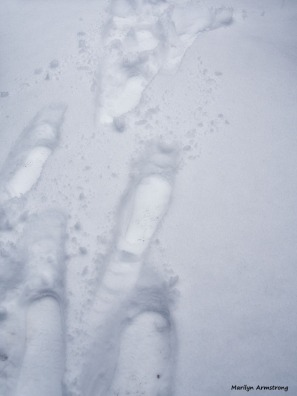 footsteps in snow January