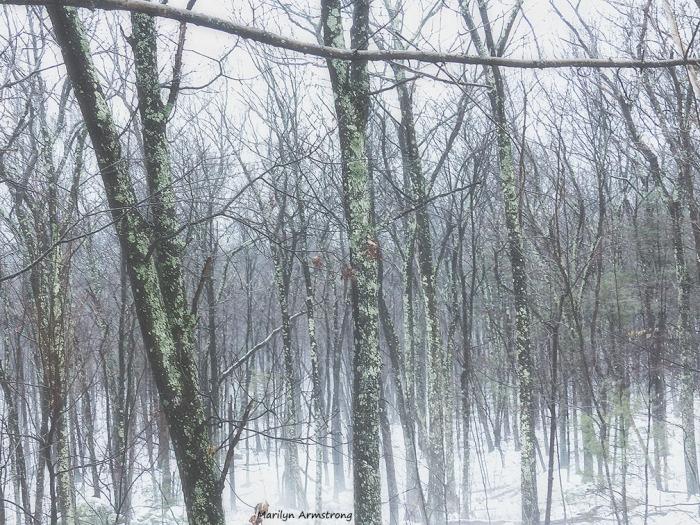 Snow today. Hello winter.