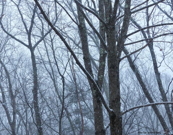 72-JAN-09_4 snowing