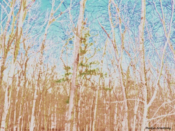 strange artistic woods