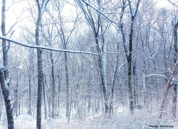72-Snow-Sunday0125_02