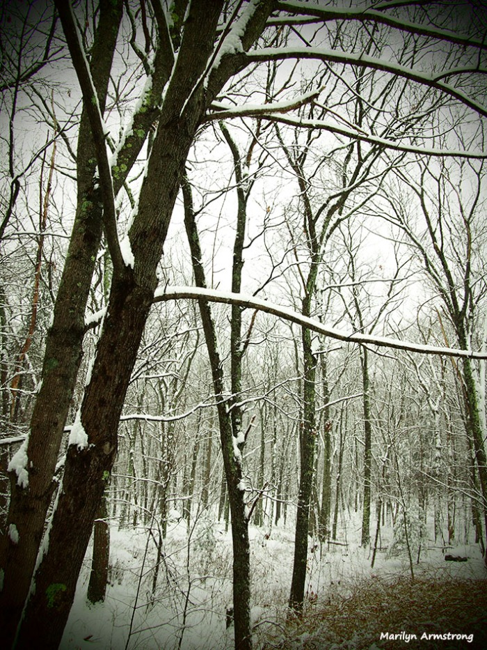 gentle snow in the woods in January