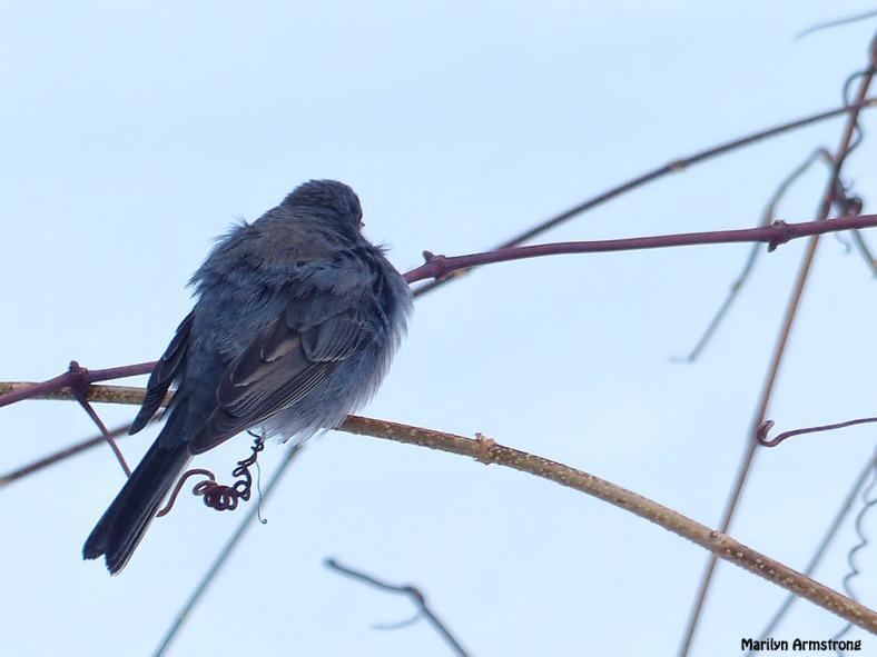 72-Birds-II_054