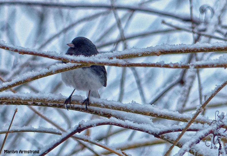 72-birds in the bush_007