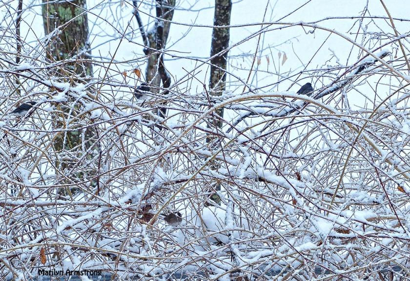 72-birds in the bush_024