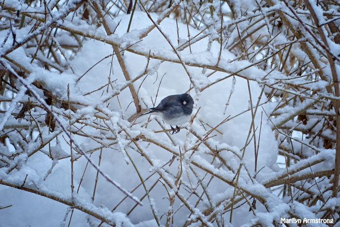 72-birds in the bush_029