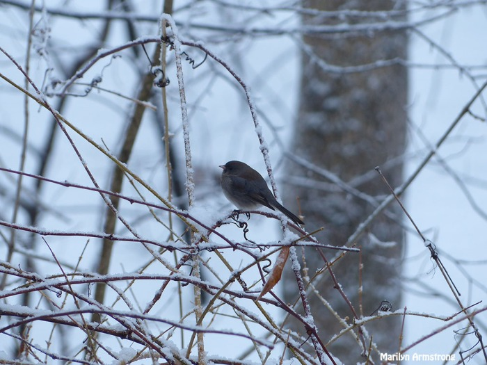 72-birds in the bush_031a