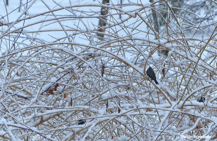 72-birds in the bush_032