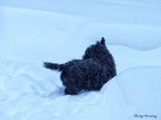 72-BONNIE-More-Snow-2-1-15_15