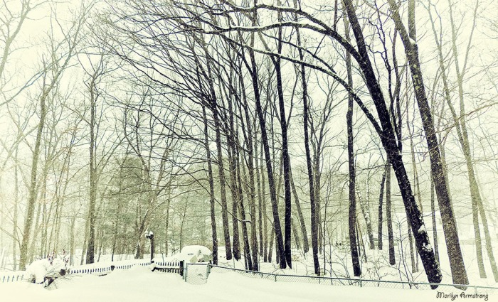 72-Front-Trees-Falling Snow-2-9_004