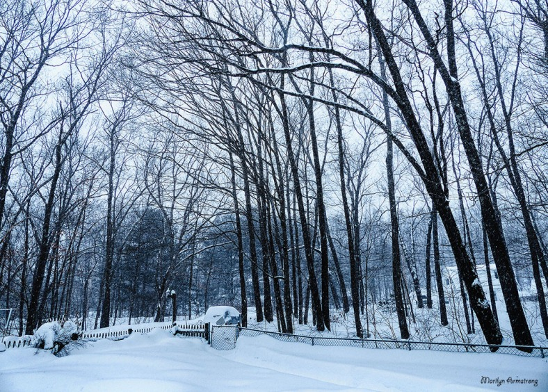 72-Front-Trees-Falling Snow-2-9_007