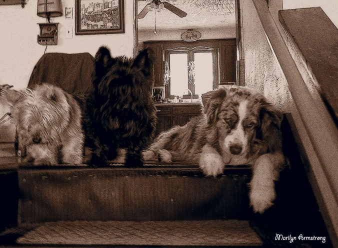 three dogs on stairs sepia