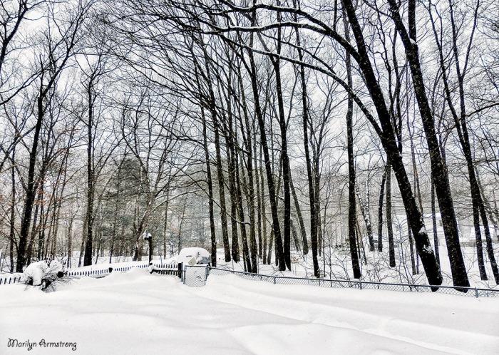 72-Snow-2-9-Hi-Contrast_004