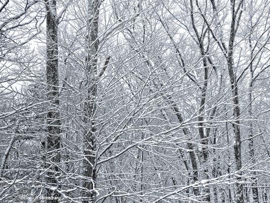 72-Snowy-Woods-Back-Deck_03