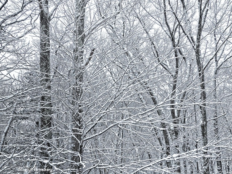 72-Snowy-Woods-Back-Deck_03