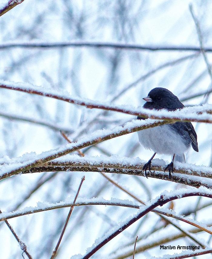 72-Vertical-birds in the bush_008