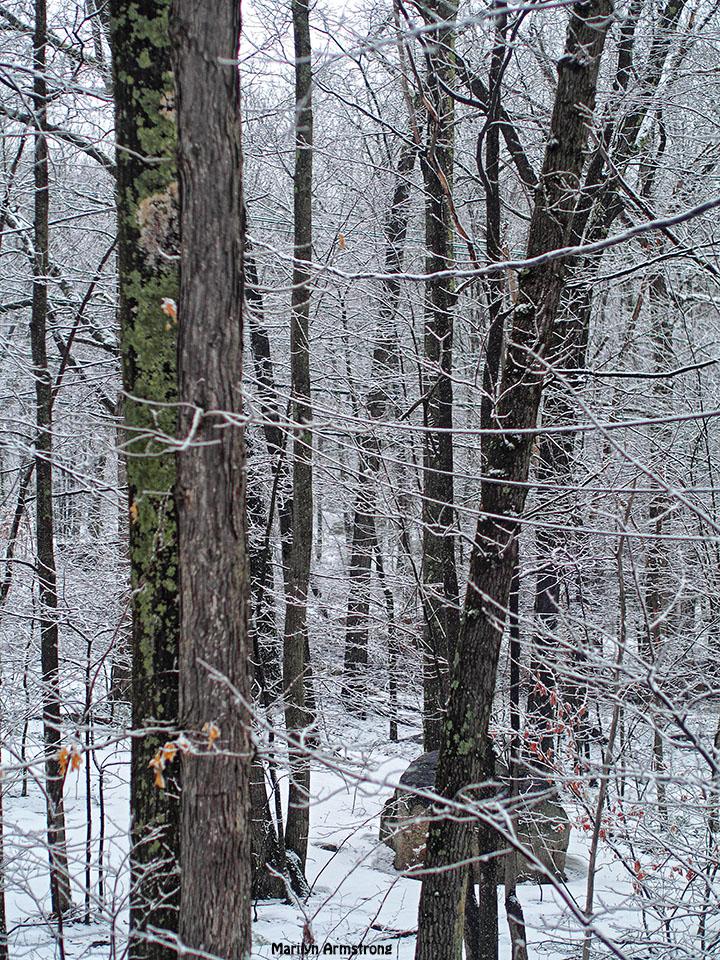 last snow bark winter