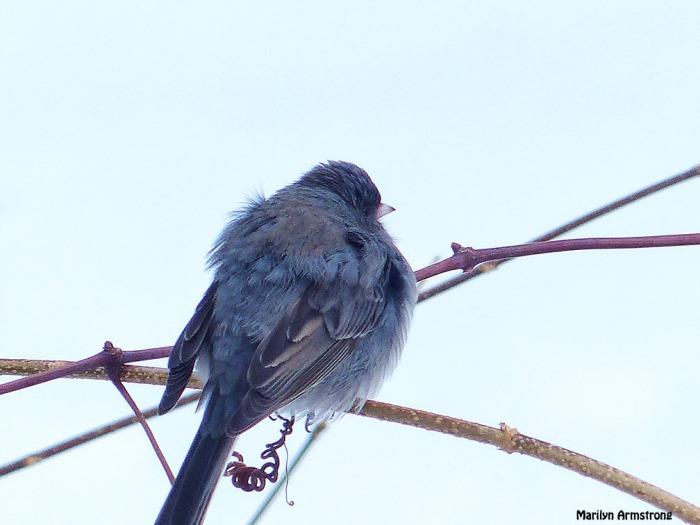 72-Birds-II_050