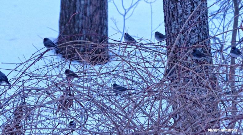 72-Birds in bush-Sunrise-0310_22