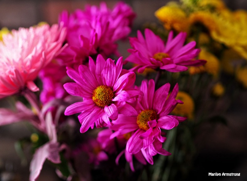 bright pink daisy bouquet
