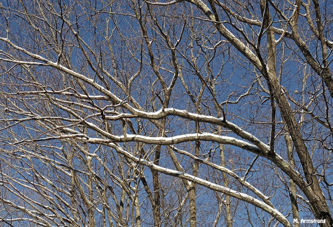 72-Branches-Snow-3-2_08