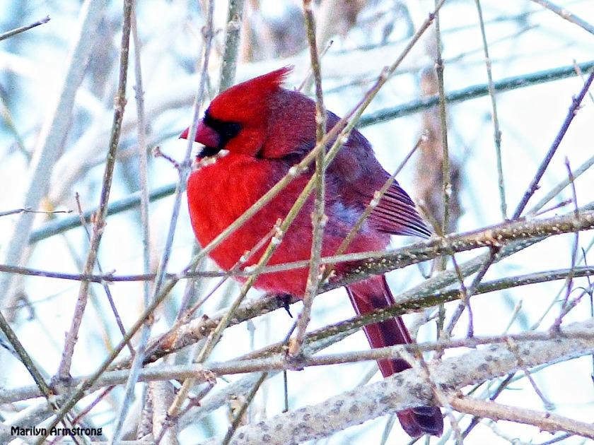 72-Cardinal-II_26