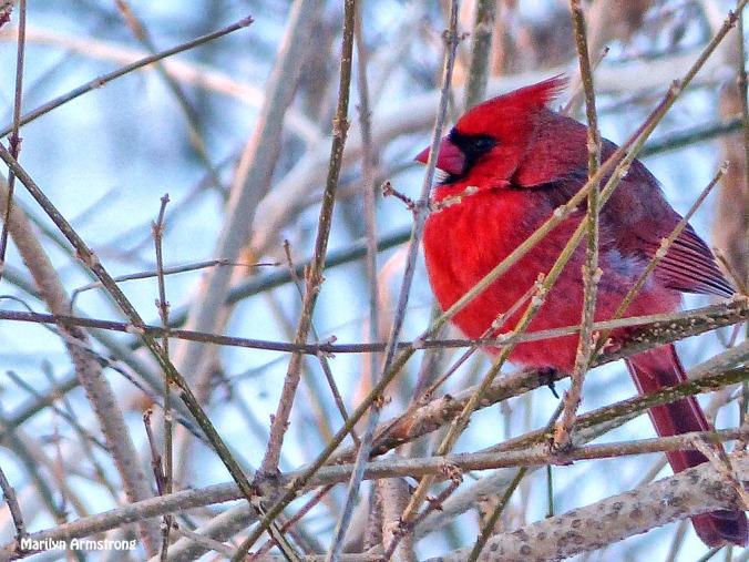72-Cardinal-II_27