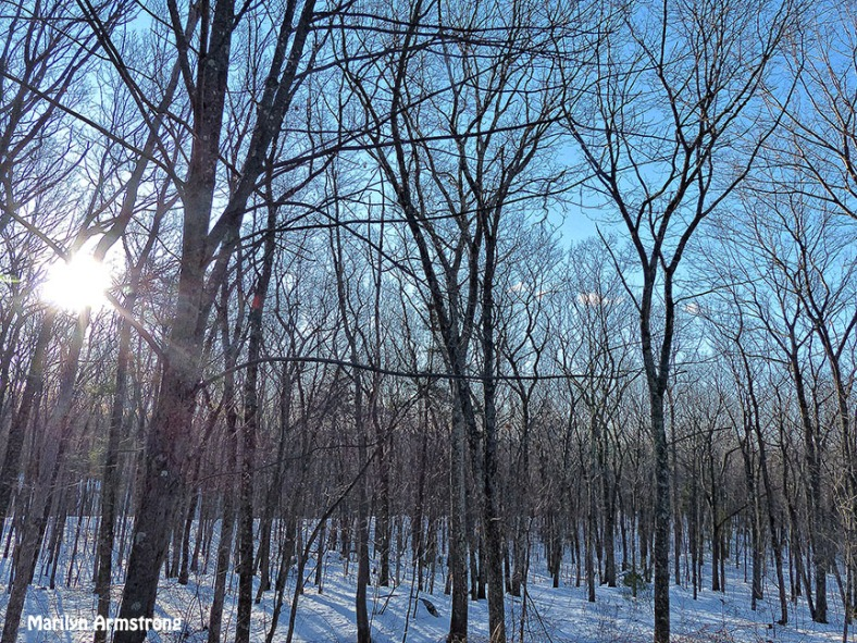 72-Early Morning Sunny Woods March-12_07