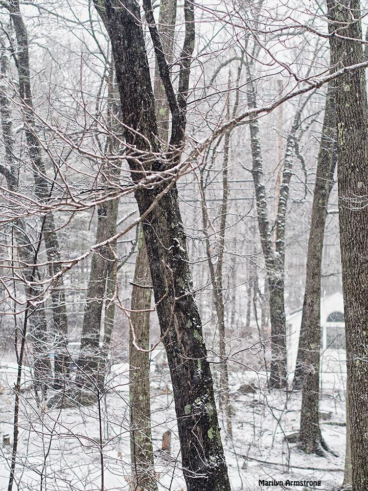 last snow trees vertical winter