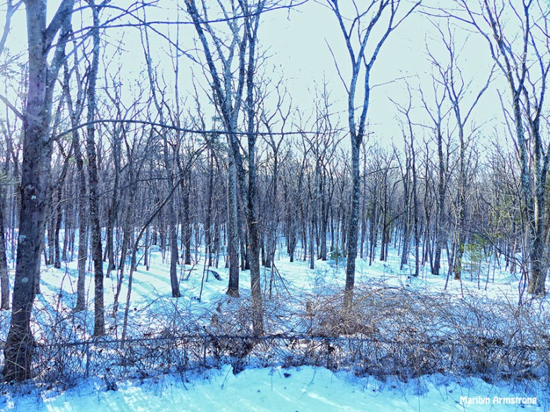 72-Morning Woods March-12_12