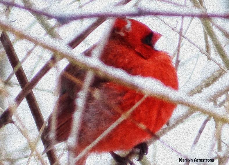 72-OIL-Cardinal_5