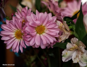 Pink chrysanthemums bouquet