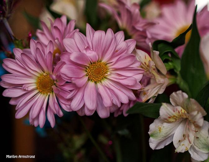 Pink chrysanthemums bouquet