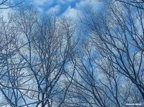 72-sky-Last-snow-D_139