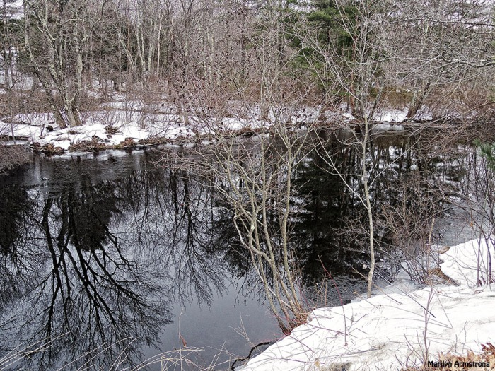 72-Snowy River-032015_41